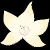 flor-vainila-slow